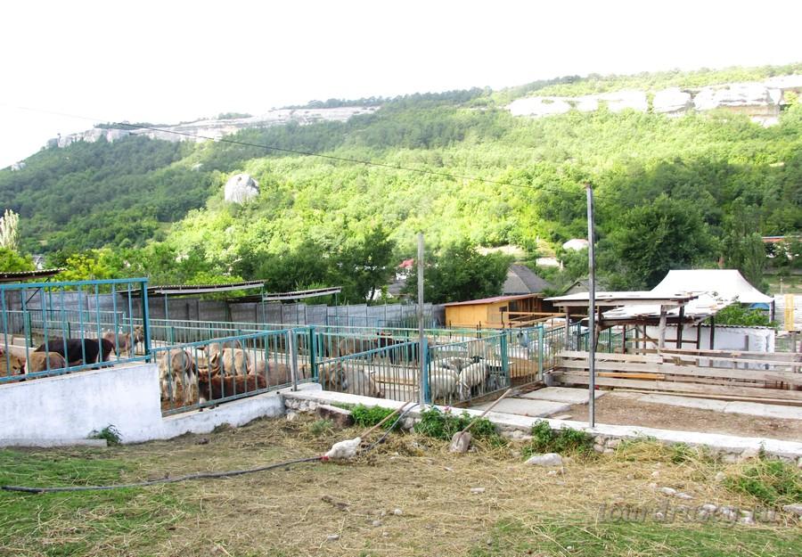На территории контактного зоопарка фермы